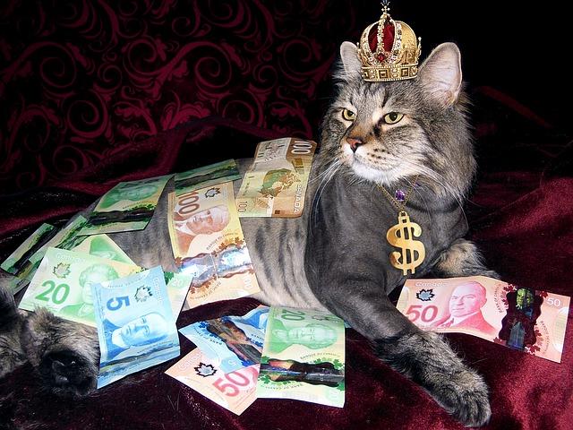bohatý kocour.jpg