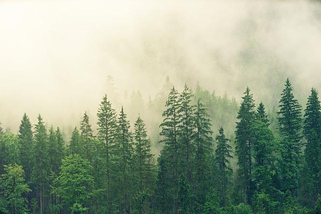 Páření lesů
